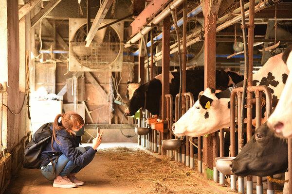 大芦牧場を視察する向井智香さん