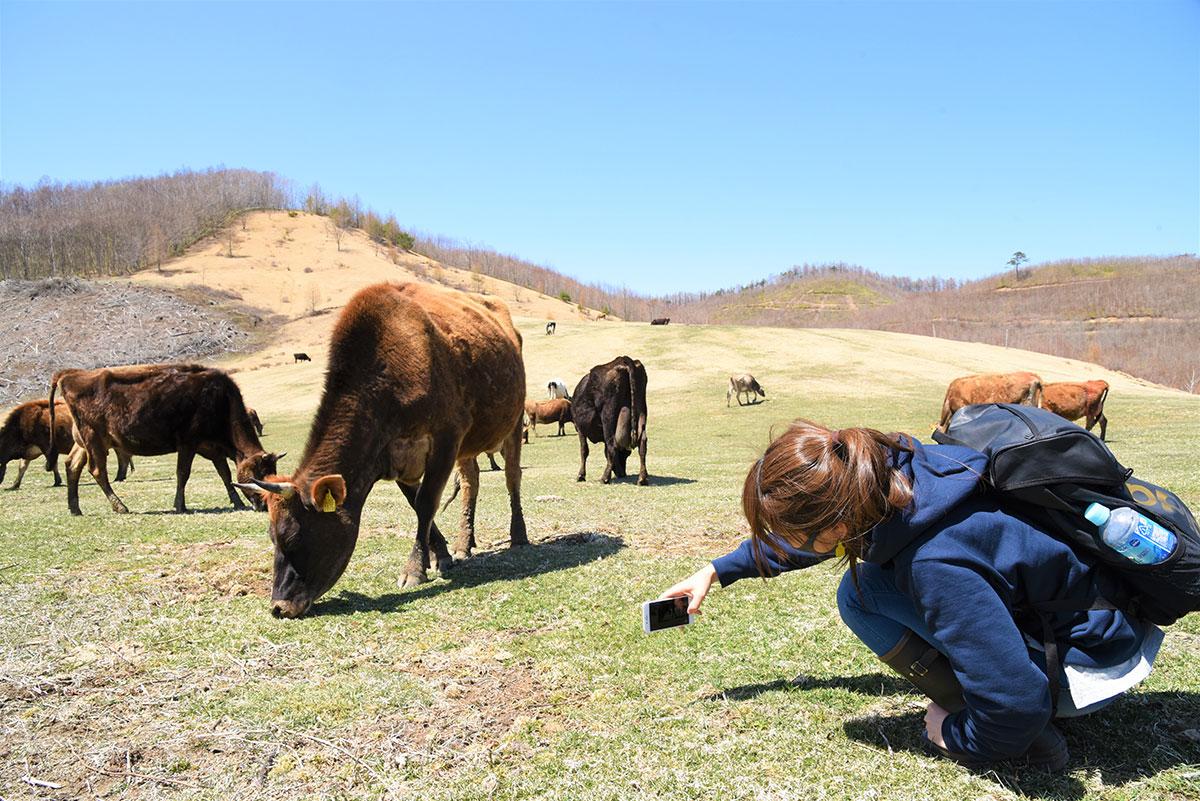 なかほら牧場で山地酪農を体感する向井智香さん